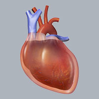 Herzprobleme und CBD