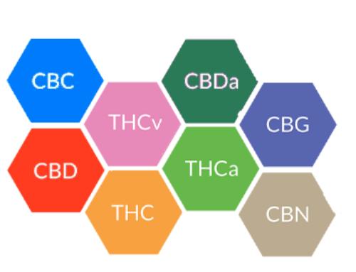 Die wichtigsten Cannabinoide neben CBD: CBN, CBC, CBG, THCv, CBDv